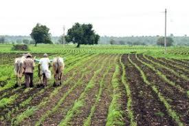 پاکستان کسان کیلئے تصویری نتیجہ
