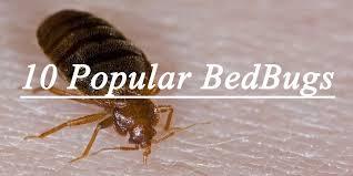 Get Little Black Black Bed Bugs Background