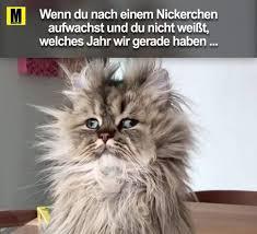 Du Lustig Witzig Sprüche Bild Bilder Nach Einem Nickerchen Katze