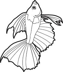 Small Picture Free Printable Realistic Fish Coloring Page for Kids 2