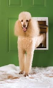 electronic dog doors. Electronic Dog Doors: The Cons Doors