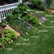 Small Picture 40 best Front Yard Veggie Gardens images on Pinterest Veggie