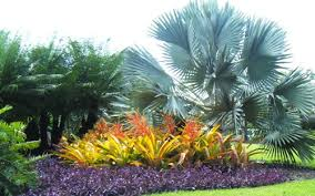 Small Picture Tropical Garden design Malaysia All Time Favorite ScapeXpert