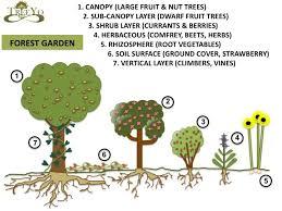 Garden Design Courses Best Forest Garden Schematic Garden Pinterest Permaculture Forest