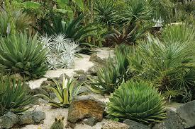 drought resistant plants