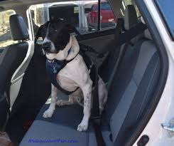 solvit deluxe car safety harness review giveaway