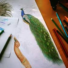 Peacock Colored Pencils Drawing Mayan Princess Drawing Work In
