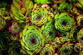 Small Picture Garden Design Garden Design with Perennial Flowers Border Sun