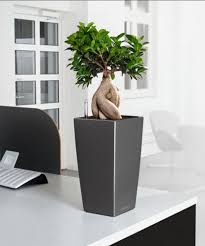 office bonsai. A Mini Bonsai Plant Located On An Office Desk. Interested In For Your Offices E
