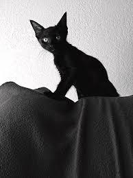 Princess Kitten Kaboodle Black And White Mens V Neck T Shirt