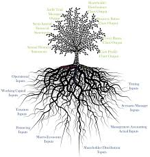Tree Root Size Chart Tree Root Length Related Keywords Suggestions Tree Root