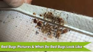 Get What Can Kill Bed Bugs Fast PNG