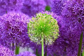 Purple Green Violet Images Pixabay Download Free Pictures