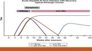 Hep B Serology Chart Hepatitis B Diagnosis And Management An Update