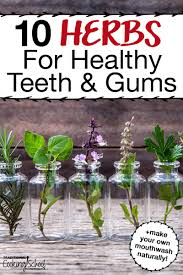 10 herbs for healthy teeth gums make your own natural mouthwash we all