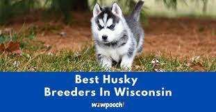 top 7 best husky breeders in wisconsin