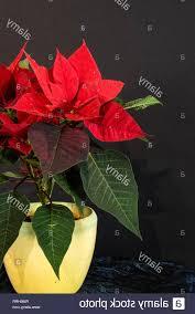 Adventsstern Weihnachtsstern Gebraucht Kaufen Nur 2 St Bis