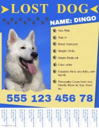 how to make lost dog flyers 360 customizable design templates for lost dog postermywall
