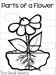 Parts Of A Plant Worksheet For First Grade Worksheets for all ...