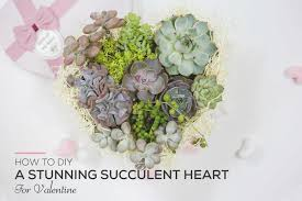 How to <b>DIY</b> a Stunning Succulent <b>Heart</b> for Valentine - Succulents Box