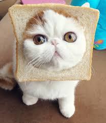 """Résultat de recherche d'images pour """"we heart it cute cat"""""""