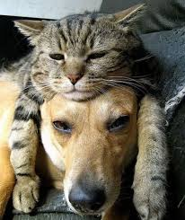 dog and cat love each other. Contemporary Other Dogandcat 30 For Dog And Cat Love Each Other