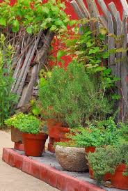 10 tips for growing herbs in pots