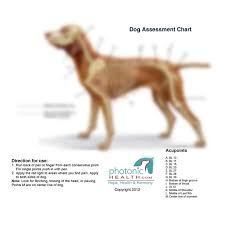 A Chart Of Dogs Photonic Health Llc Dog Charts