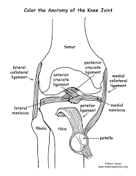 Small Picture Image result for free human anatomy coloring pages pdf Human