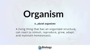 organism definition and exles