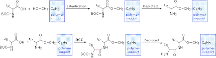 In the following diagrams of polypeptide synthesis