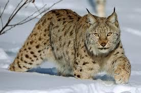 Instinct animal... Images?q=tbn:ANd9GcR_ONCA4TSSgAkwkjJCSL8XwrDWxA1hRXI07y_Durv3LiemKwmQdg