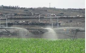 Can I Irrigate Animal Manures On Growing Crops