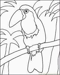 Small Picture Toucan Coloring Page Free Toucan Coloring Pages