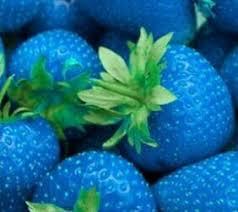 Bildergebnis für blaue erdbeeren kaufen