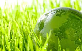 Помощь в написании диссертации по экологии в Украине Диссертация по экологии