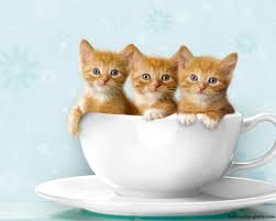 cute cat hd wallpapers free only green