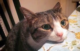 pflanzliche beruhigungsmittel für katzen