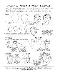 Small Picture Letter size handout on How to Draw a Prickly Pear Cactus