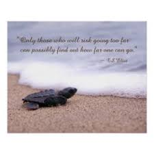 Turtle Quotes Small Beginnings Big Things Motivation turtles quotes wellness 6