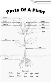 Small Picture Photosynthesis Coloring Page Photosynthesis Worksheets and Plants