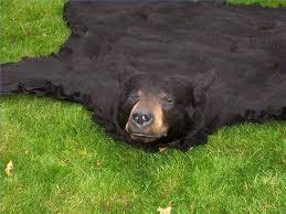 a bear rug polar bear rug fake bear rug taxidermy