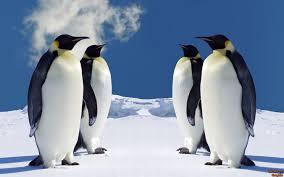 Background, penguins, wallpaper, animal ...