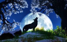 howling wolf wallpaper. Beautiful Wolf Intended Howling Wolf Wallpaper L