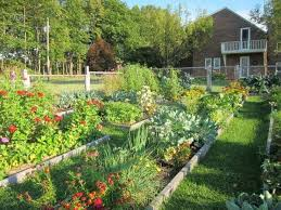 17 high yield vegetables to grow in
