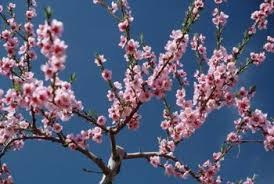 Jeremy BrockpahlerHow To Graft Fruit Trees With Pictures