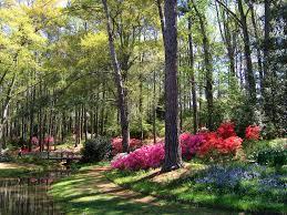 callaway gardens in georgia. Early April In Georgia\u0027s Callaway Gardens | By UGArdener Georgia V