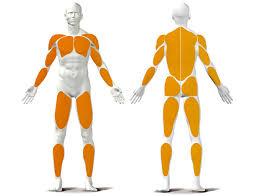 Welke spieren train je met roeien