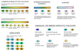 Kitten Color Chart Colour And Coat Genetics In Cats Cats From Your Wildest Dreams