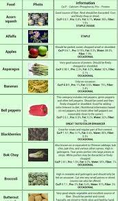 Food List Pg1 Bearded Dragon Diet Bearded Dragon Food